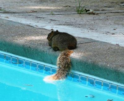 Squirrel Cooling Off