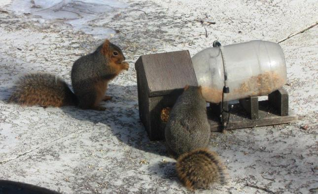 Bob's Squirrels